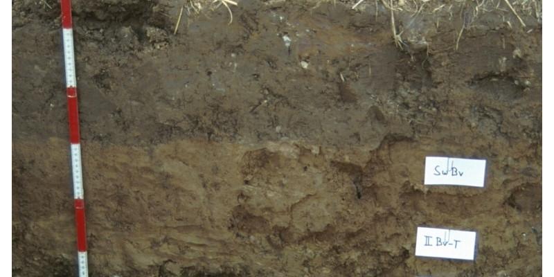 Ein Bodenprofil mit unterschiedlich gefärbten Schichten der Braunerde..