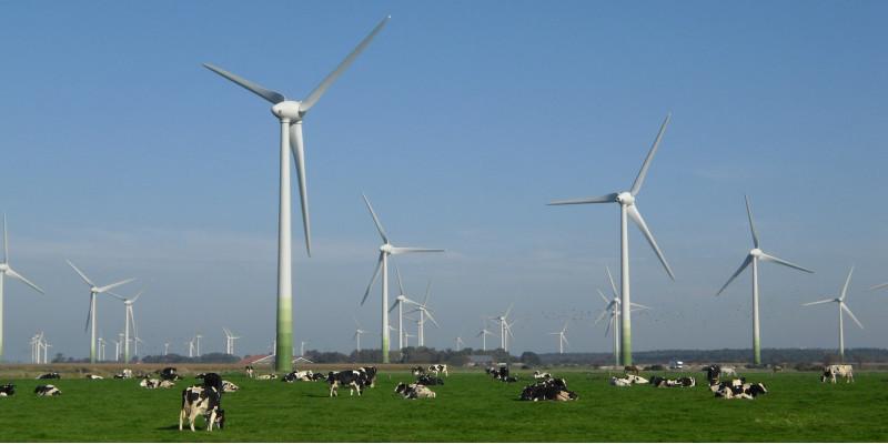 Windpark mit Kuhweide