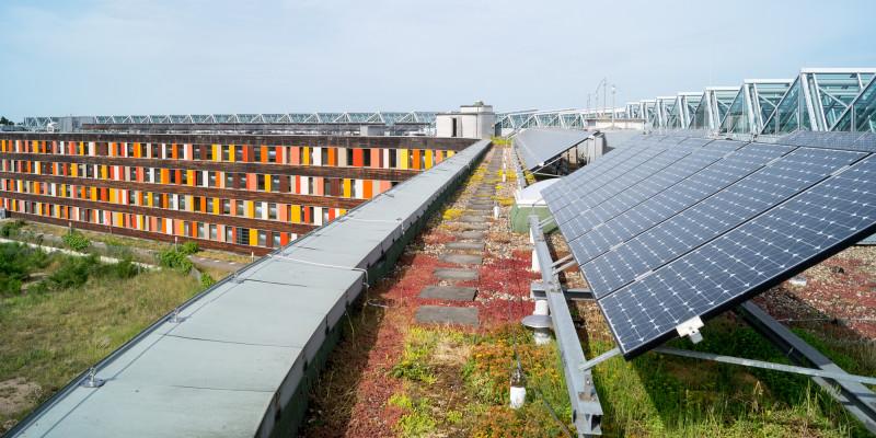 Photovoltaikmodule auf einem Dach mit Dachbegrünung