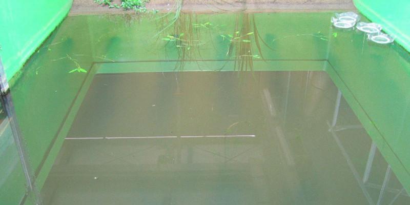 Teichbecken fast ohne Bewuchs mit Wasserpflanzen