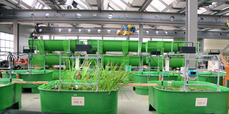 grüne Behälter in der FSA-Halle, in denen Wasserpflanzen wachsen