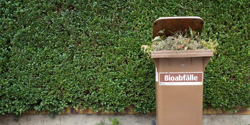 """auf einem Gehweg steht vor einer grünen Hecke eine braune Mülltonne, auf der """"Bioabfälle"""" steht und aus der Gartenabfälle herausgucken"""