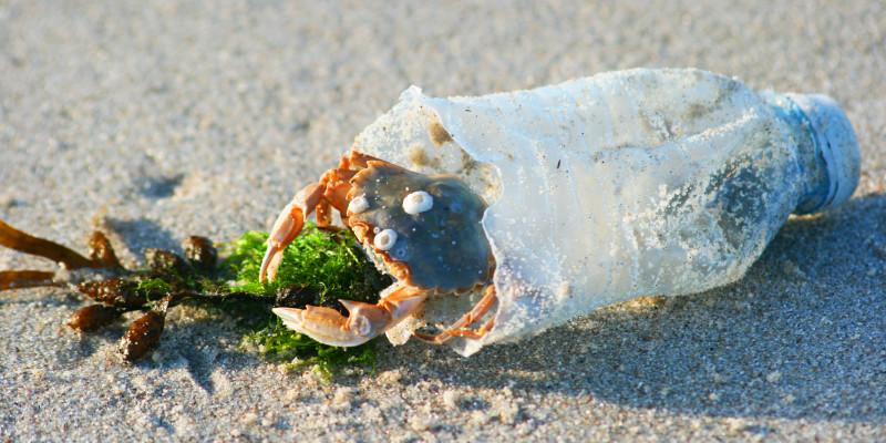 eine Krabbe in einer Plastikflasche am Strand