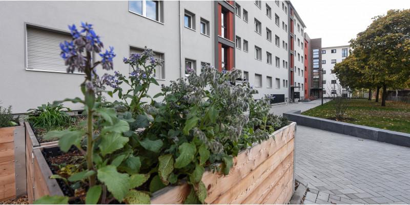 Häuserzeile und bepflanztes Hochbeet