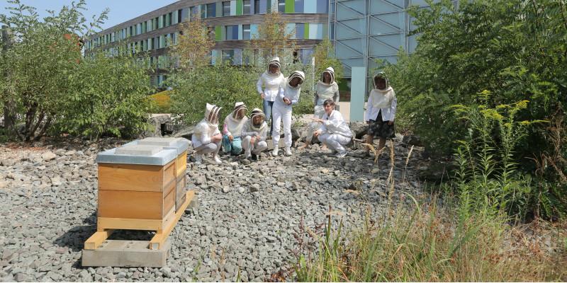 Personen in Imkeranzügen vor Bienenstöcken