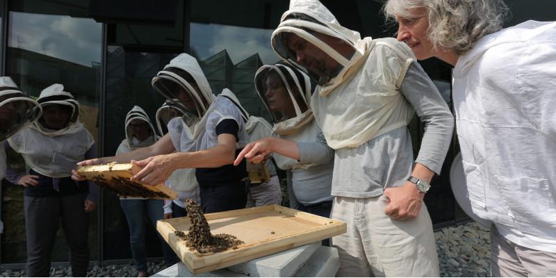 mehrere Personen mit einem Imker-Schutz für Kopf und Oberkörper sehen bei dem Öffnen eines Bienenstocks zu.