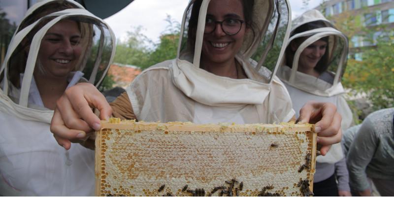 eine junge Frau in Imkerschutzkleidung hält einen Holtzahmen mit Bienenwaben, die mit Bienen besetzt sind.
