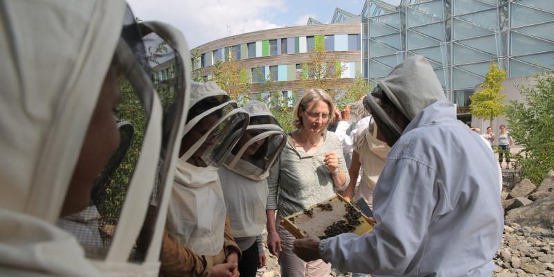 eine Gruppe Menschen mit Imker-Schutzkleidung für Kopf und Oberkörper schaut beim Öffnen eines Bienenstocks zu.