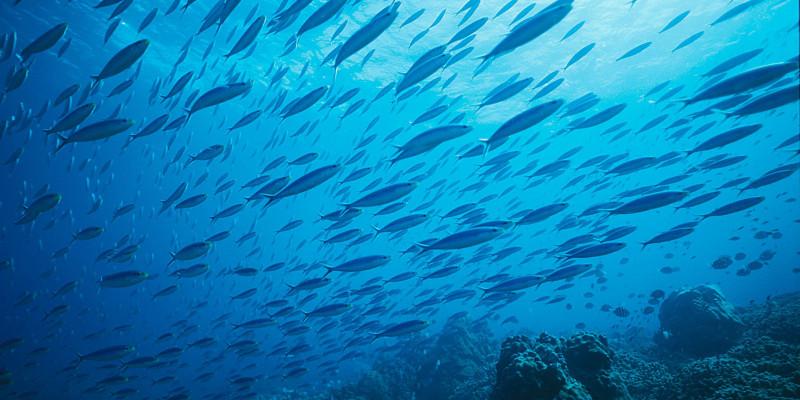 Fischschwarm am Meeresboden