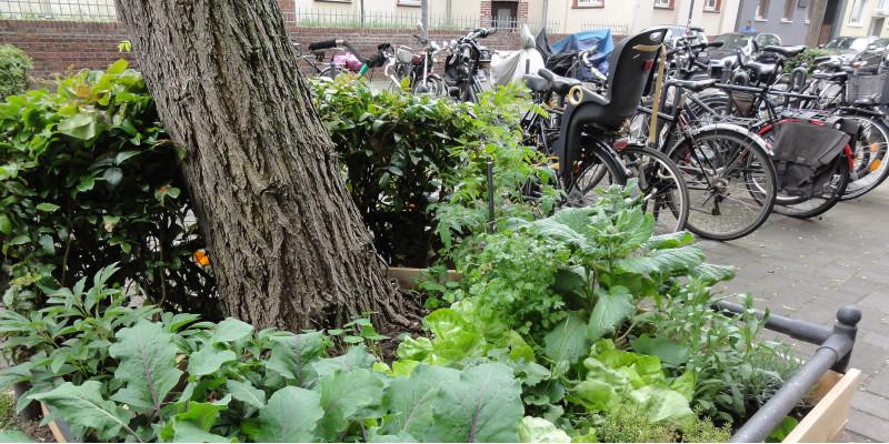 eine bepflanzte Baumscheibe und abgestellte Fahrräder in der Stadt