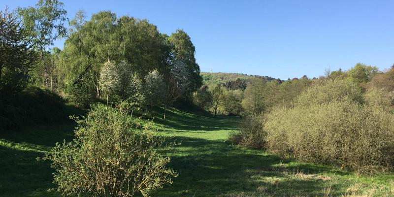 abwechslungsreiche, hügelige Landschaft mit Wiese, Bäumen und Gebüschen