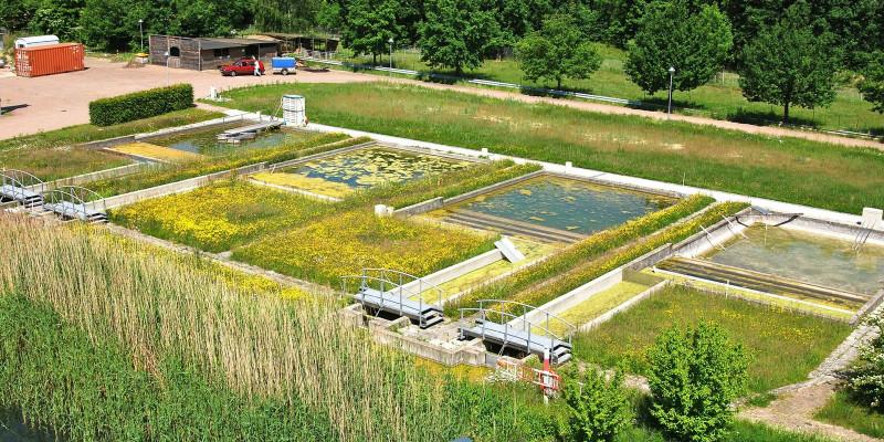Außenanlage mit wassergefüllten und bepflanzten quadratischen Betonbecken