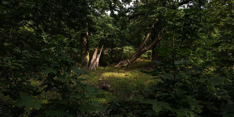 in einem dunklen Gehölz fällt Licht auf einen alten abgebrochenen Baum