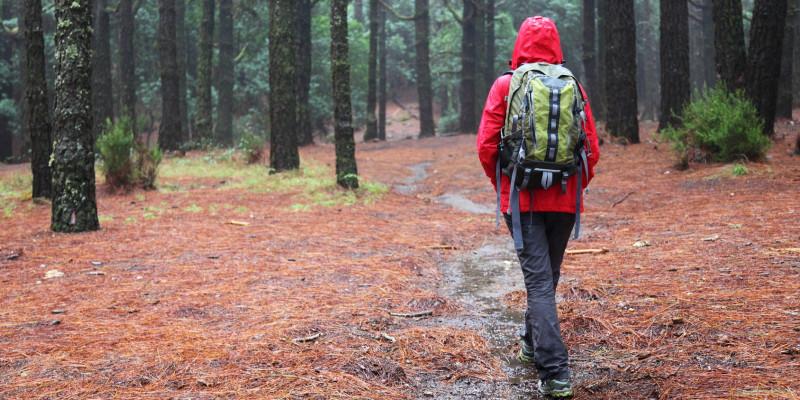 Wanderer mit einer roten Regenjacke und einem Rucksack läuft durch einen Wald bei Regen