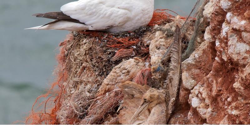 ein Seevogel hat sich an einem Kunststofffaden stranguliert