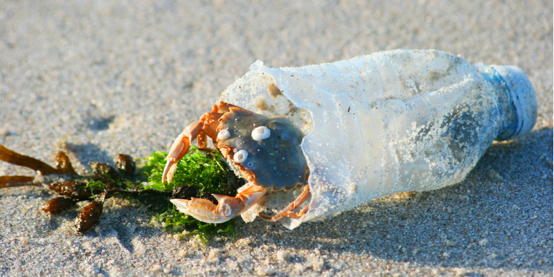 eine Krabbe auf einem Sandstrand sitzt in einer kaputten Plastikflasche