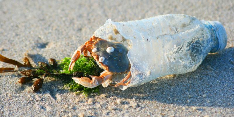 am Strand liegt eine leere, kaputte Plastikflasche, in der eine Krabbe sitzt