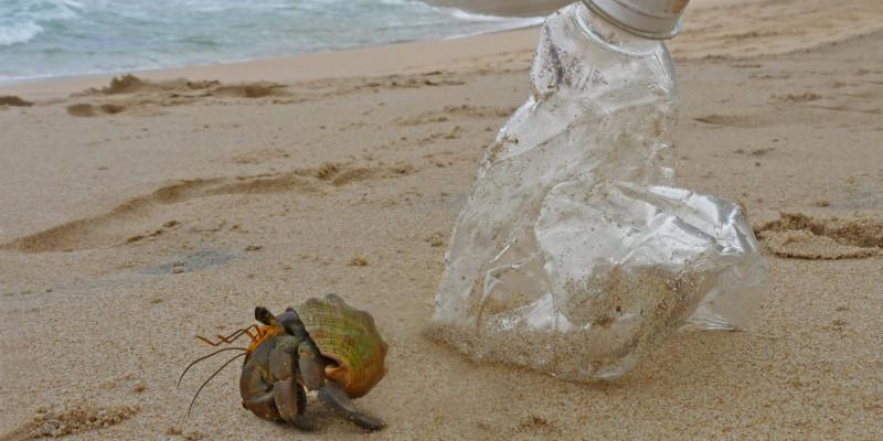 Einsiedlerkrebs und Plastikflasche an einem Strand