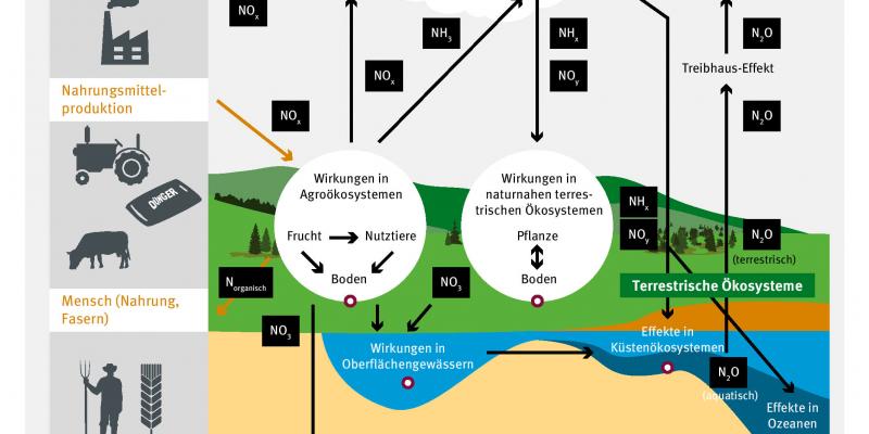 Schaubild zu den Stoffströmen: Durch menschliches Handeln wie Energie- und Nahrungsmittelproduktion gelangt NOx in die Luft und in den Boden. Aus dem Boden gelangt N2O in die Luft und NO3 in Oberflächengewässer und das Grundwasser und weiter in die Meere.