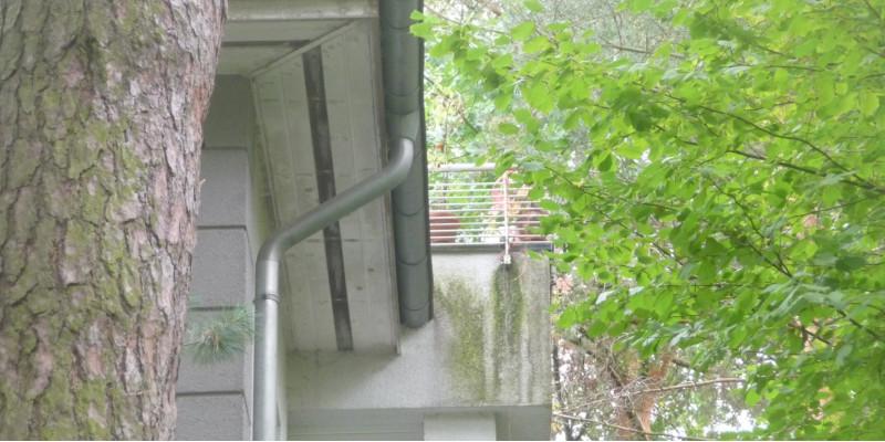 weiße Hausfassade, unter einem Balkongeländer, wo häufig Wasser die Fassade herunterfließt, hat sich ein grüner Belag gebildet