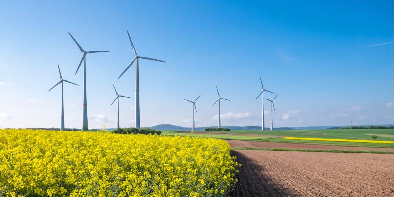 Windpark, im Vordergrund ein blühendes Rapsfeld