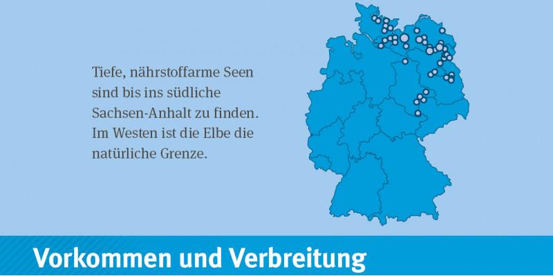 Deutschlandkarte: Der Gewässertyp 2014 kommt in Jungmoränengebiet von Brandenburg, Mecklenburg-Vorpommern, Schleswig-Holstein und Sachsen-Anhalt vor.