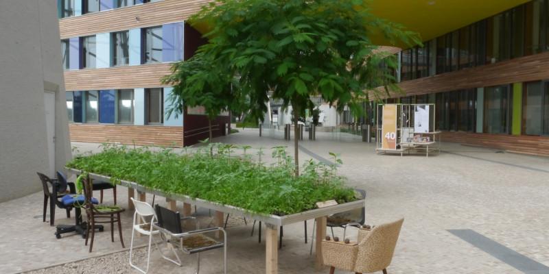 Im Forum des UBA steht ein Tisch mit mehreren Stühlen, auf dem Tisch wachsen Pflanzen aus den ehemaligen Samenbomben.