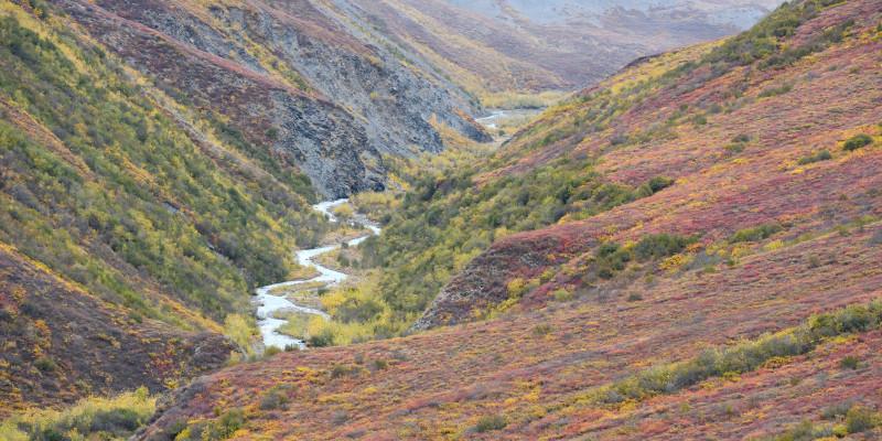 Farbenfrohe Herbstlandschaft in Alaska