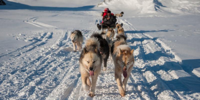 Schlittenhunde in Tasiilaq, Grönland