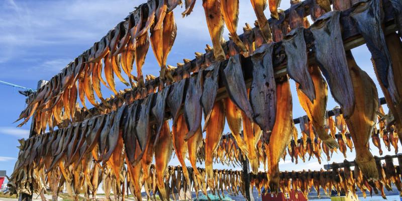 Stockfisch in der Rodebay-Siedlung auf Grönland
