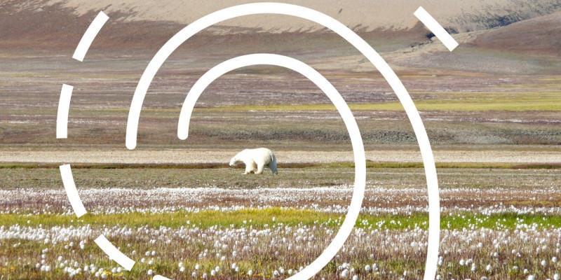 """Ein Eisbär in der kanadischen Hocharktis im Frühling. Über dem Foto liegt eine grafische Spirale als Symbol für die Ausstellung """"Arktische Spirale""""."""