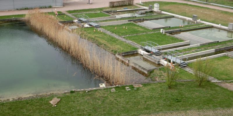 Ein größerer Teich und mehrere kleine Becken, dahinter ein Parkplatz und Gebäude
