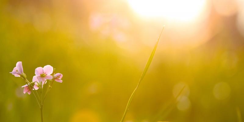 Blumenwiese auf die die Sonne scheint