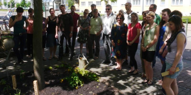 Mitarbeiter des UBA pflanzen in der Dessauer Innenstadt ein Blumenbeet (Baumscheibe). Hier sehen Sie sich das Resultat ihrer Arbeit an.