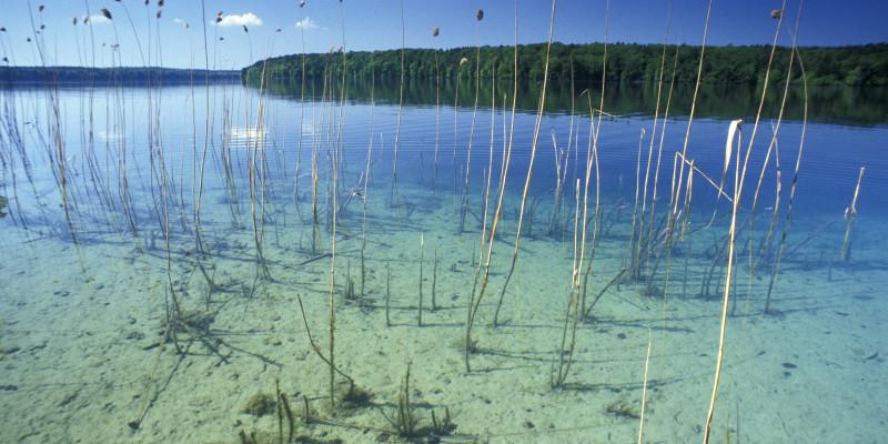 Ein Schilfgürtel umsäumt einen See