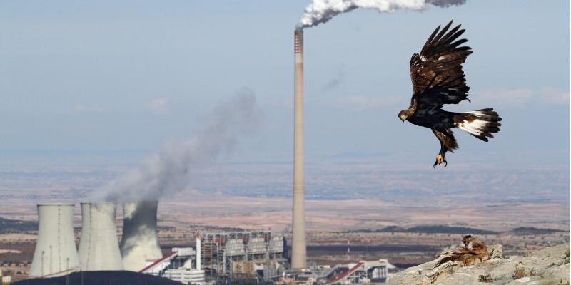 Adler und Kraftwerk