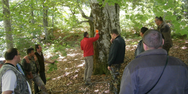 Men stand in the Woods and mark a tree with red color