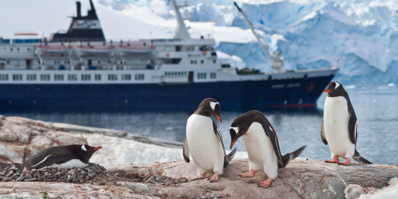 Penguins in the antarctic, behind a cruising ship