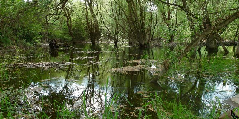 Auwald mit offener Wasserfläche.