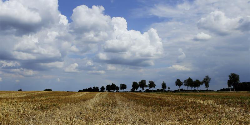 Abgeerntetes, gelbes Getreidefeld vor blauem Himmel.