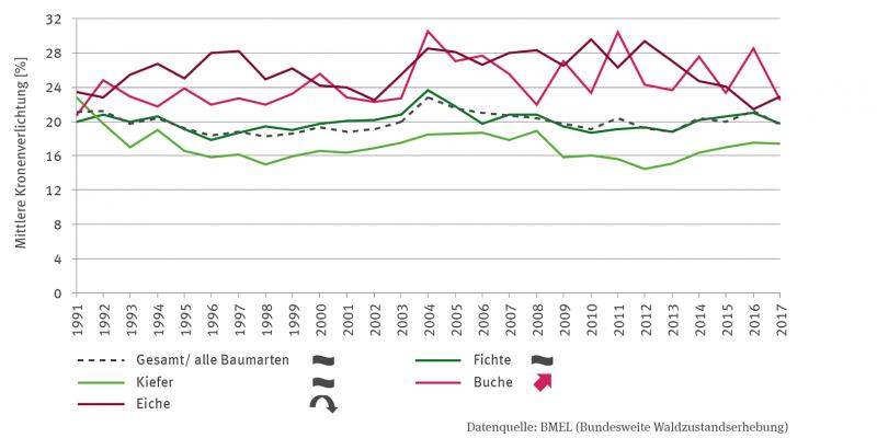 Dargestellt ist in einer Linien-Grafik die mittlere Kronenverlichtung in Prozent für den Gesamtwald sowie die Baumarten Fichte, Kiefer, Buche und Eiche für den Zeitraum 1991 bis 2017. Für die Buche gibt es einen signifikant steigenden Trend, für die Eiche ist er quadratisch fallend. Für die übrigen Baumarten und den Gesamtwald gibt es keinen Trend.