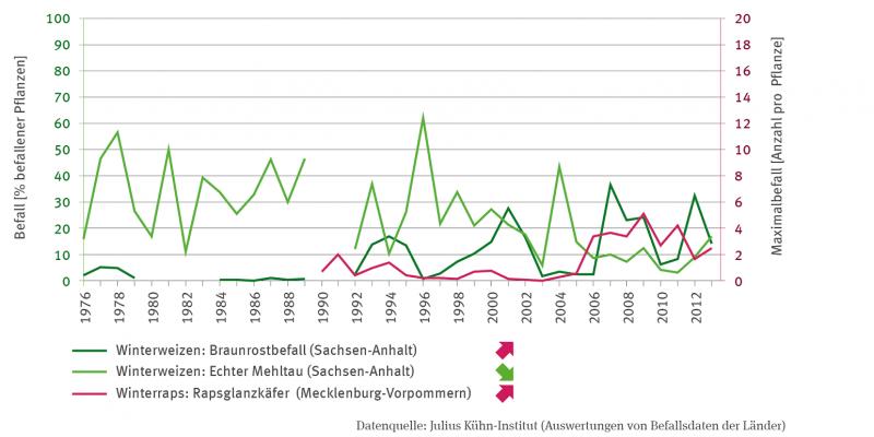 Die Linien-Grafik zeigt den Befall als Prozent befallener Pflanzen von Winterweizen und zwar den Braunrostbefall und den Befall mit Echtem Mehltau, beides für Sachsen-Anhalt.