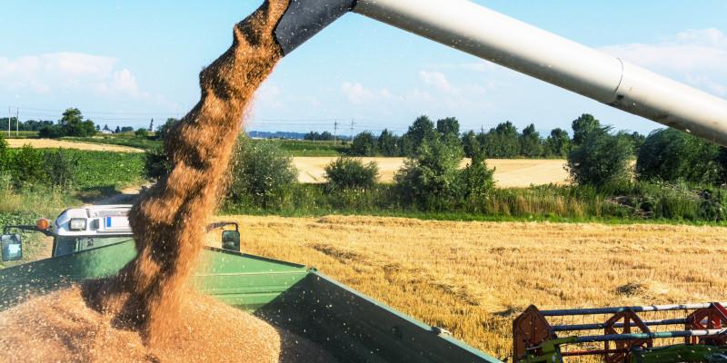 Ernteszene bei der Getreideernte, Korn wird mit Rohr auf Anhänger transportiert.