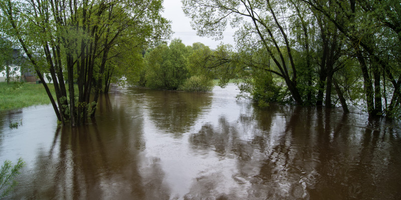 Überfluteter Auwald.