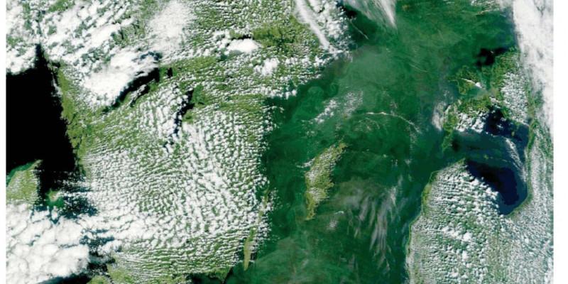 Das Foto aus dem Weltraum zeigt, dass am 12. Juli 2011 Blaualgen die gesamte Ostsee zu etwa 90 Prozent bedeckten.