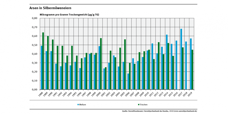 Silbermöweneier von der schleswig-holsteinischen Insel Trischen waren meist etwas stärker mit Arsen belastet als Möweneier von der niedersächsischen Insel Mellum. Allerdings steigt die Belastung auf Mellum seit etwa 2006 deutlich (um 100 Prozent).