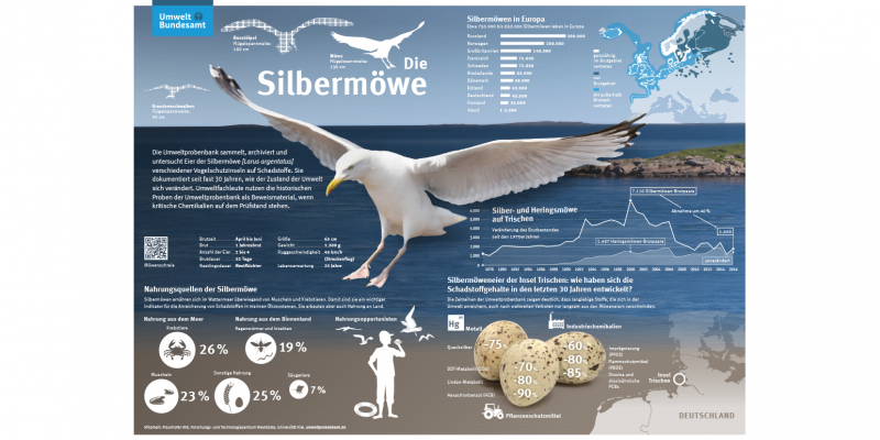 Schaubild zur Silbermöwe in Europa, Nahrungsquellen der Silbermöwe, Silbermöweneier der Insel Trischen: wie haben sich die Schadstoffgehalte in den letzten 30 Jahren entwickelt?