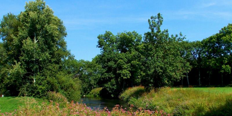 Wiese und Wald am Ufer eines kleinen Flusses