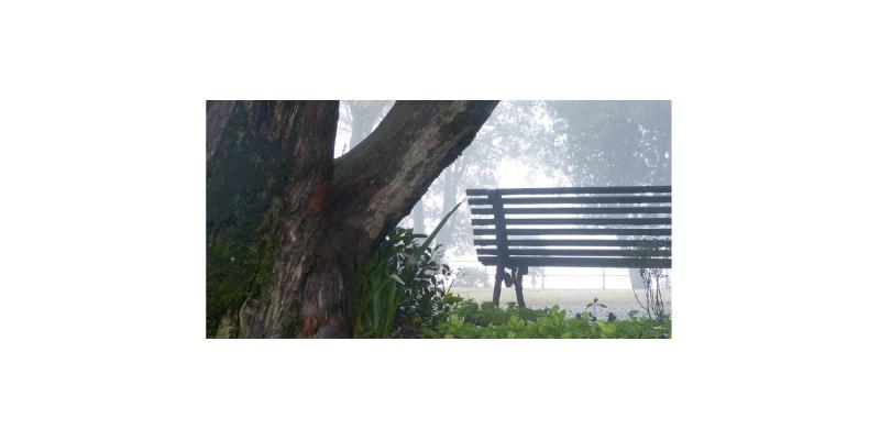 Themenblatt: Anpassung an den Klimawandel. Natur in der Stadt