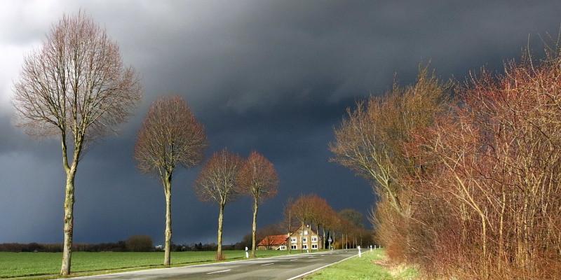 Dunkle Wolken über einer herbstlichen Allee in ländlichem Gebiet